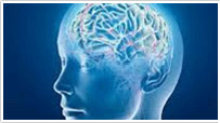 Baby boomer brain: Latest Alzheimer's research